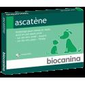 Biocanina ascatène 10 comprimés